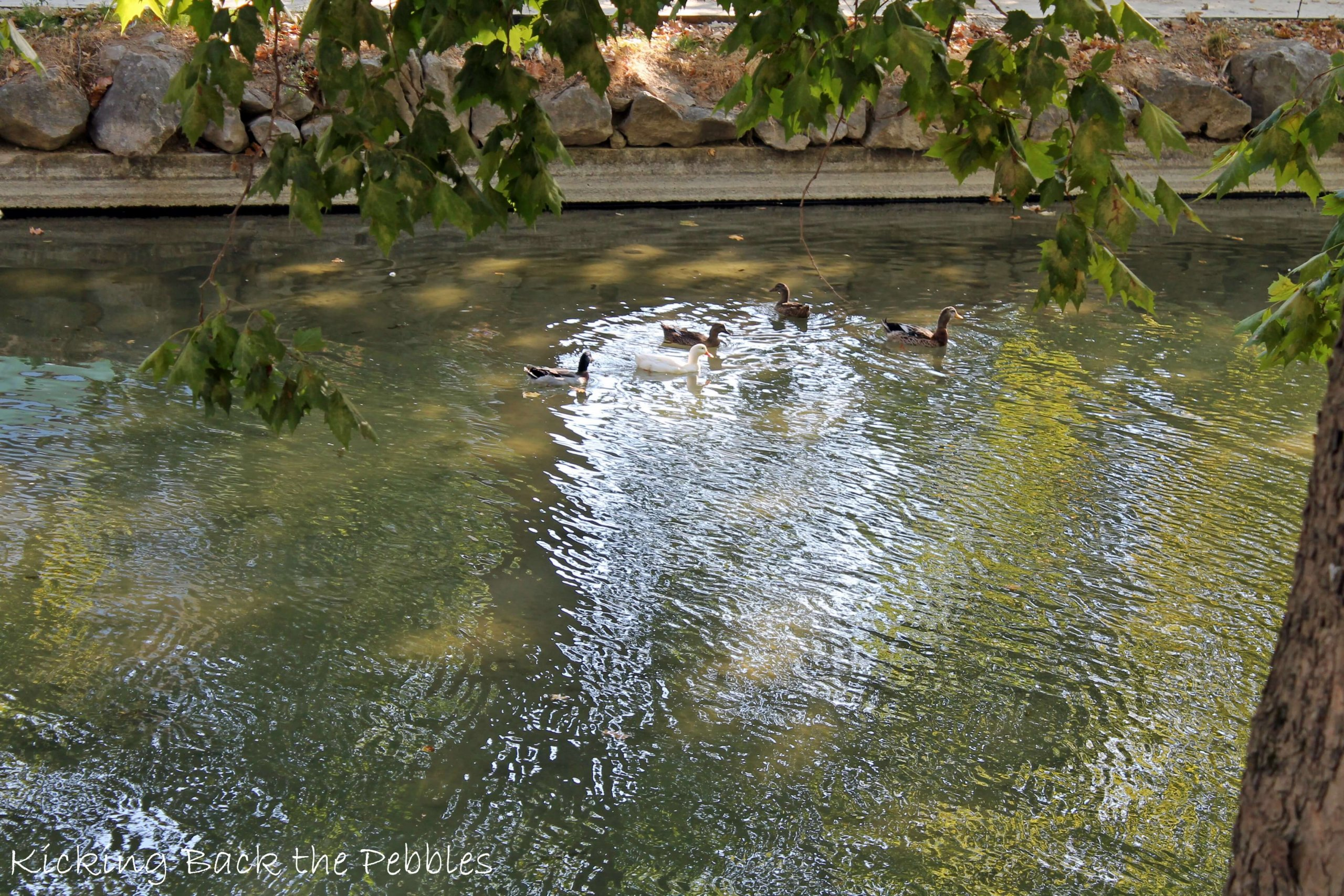 Litheos River | Kicking Back the Pebbles